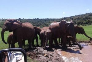 Jeffreys Bay: Addo Elephant National Park Day Tour