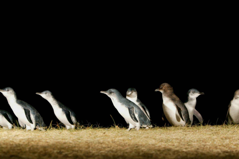 Phillip Island: Penguins and Wildlife Full-Day Tour