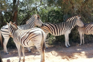 Port Elizabeth: 2-Day Addo Safari Tour & Night Drive