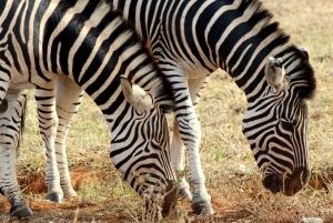 Port Elizabeth: Addo Elephant National Park 2-Day Safari
