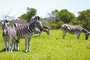 Port Elizabeth: Game Reserve Driving Tour
