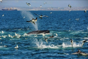 Port Elizabeth: Whale, Dolphin and Penguin Boat Cruise