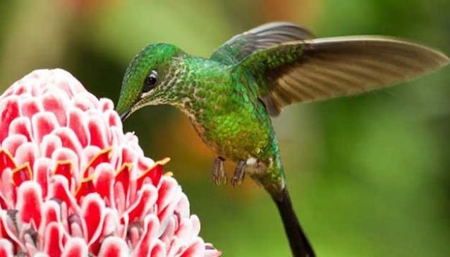 Hummingbird Heaven - An Eco Tour in Ecuador