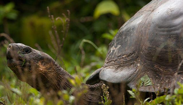 Thinking of Visiting the Galapagos Islands?