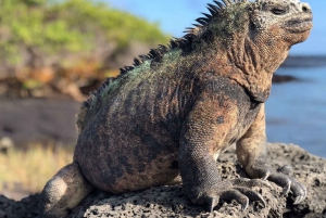 6-Day Galápagos Adventure Tour on 4 Islands