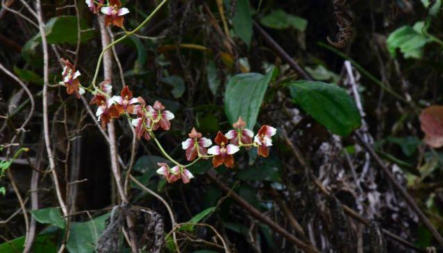 Ecuagenera Orchid Tours