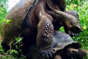 From Baltra Island: Galápagos Islands 5-Day Nature Tour