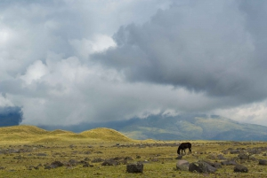 From Quito: Cotopaxi Hiking and Biking Tour