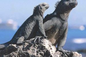Galapagos Flash 4-Day Tour