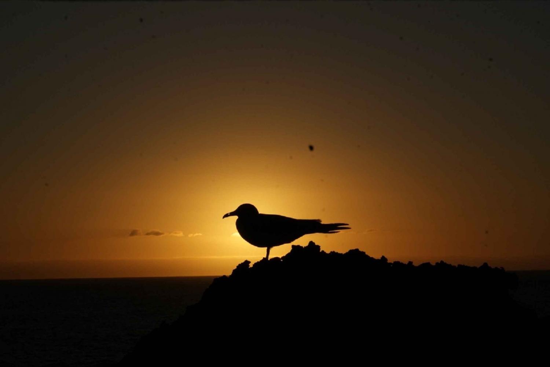Galápagos Islands 5-Day Nature Tour