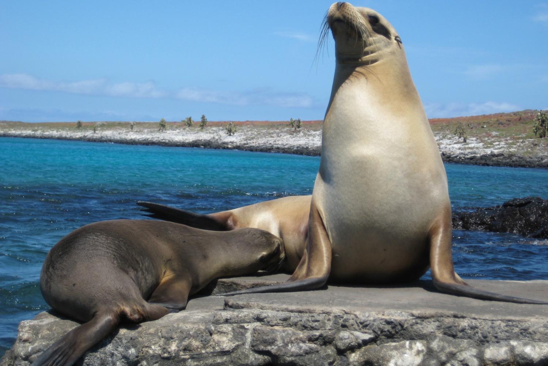 Mini Galapagos 3-Day Tour