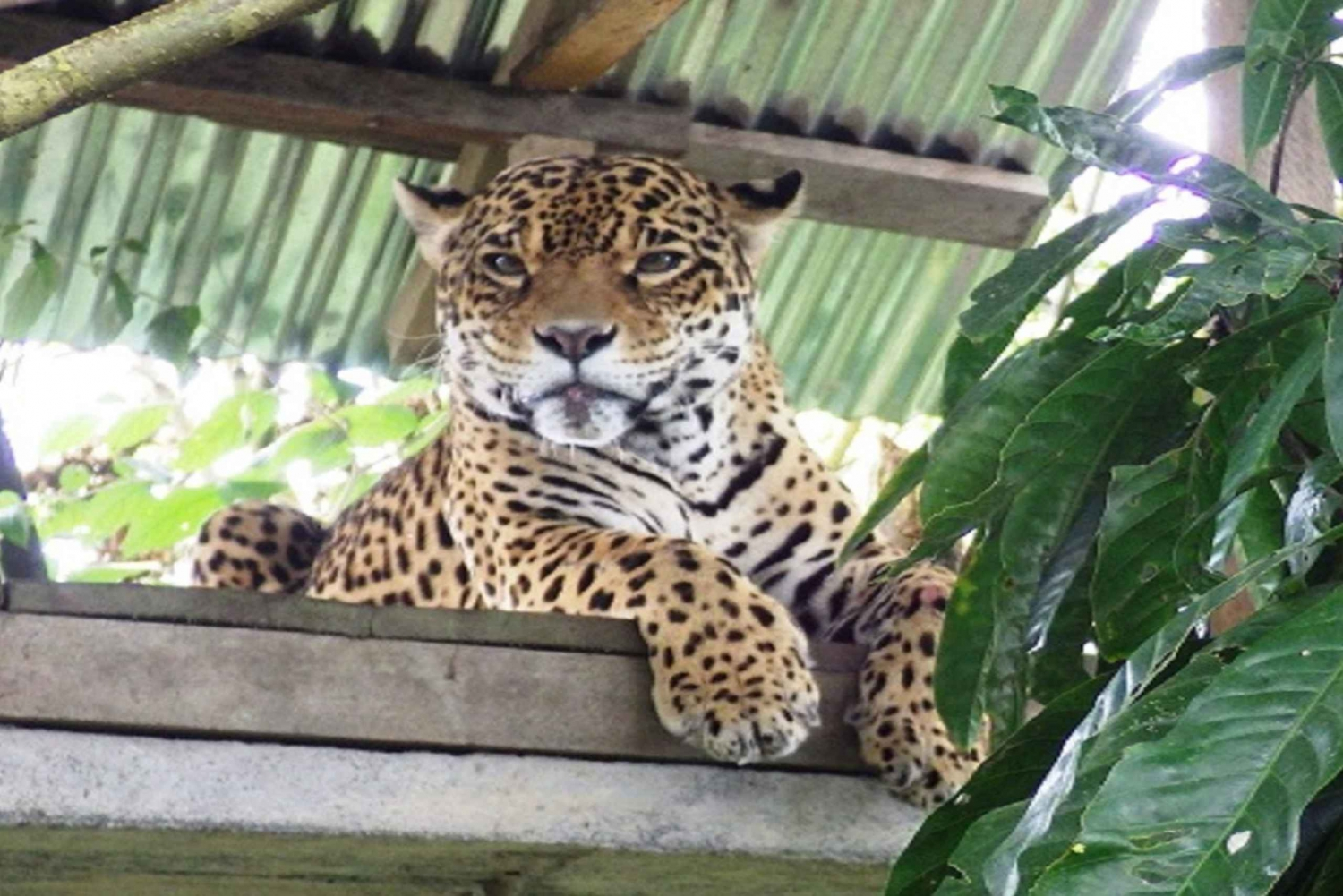Puyo Jungle Full-Day Amazon Tour from Baños
