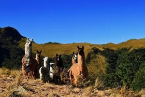 Quito: Private Pasochoa Reserve Hiking Tour