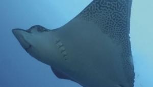 Scuba Galapagos