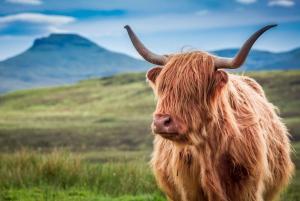 Edinburgh: Loch Ness, Inverness & Highlands Tour in Spanish