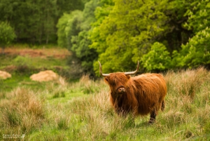 From 2-Day Loch Ness, Inverness & Highlands Tour
