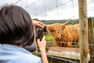 Loch Ness and Scottish Highlands Full-Day Tour