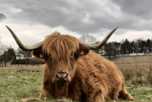Private Scottish Lowlands Countryside Tour