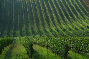 Afternoon Tour of the Chianti Wine Region in Tuscany