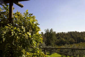 Chianti Colli Fiorentini Winery Tour 18km from Florence