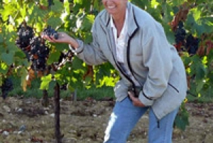 Chianti Wine and Hill Towns Full-Day Tour with Deluxe Van