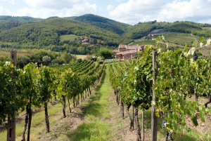 Chianti: Wine and Oilve Oil Tasting from Florence