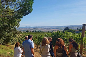 Florence: Val d'Orcia Highlights Tour with Wine Tasting