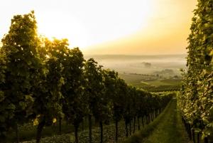 From Bolgheri Full Day Wine Tour
