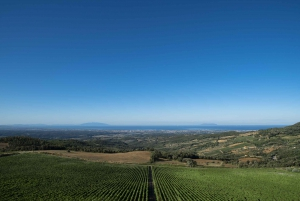 From Bolgheri Wine Tour with Tasting and Lunch