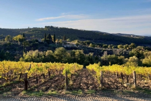 From Florence: Bolgheri Full Day Wine Tour