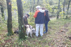 From Florence: Truffle Hunt and Lunch in the Countryside
