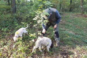 From Truffle Hunt and Lunch in the Countryside