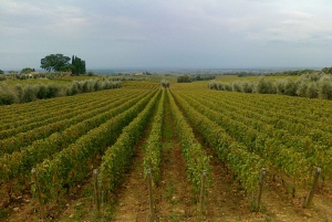 Full Day Bolgheri Tuscan Private Tour from Florence