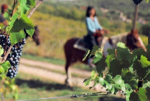 Horses and Vineyards - Horseback riding in Tuscany