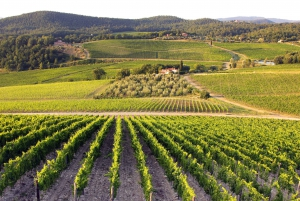Tuscany: Full-Day Small Group Wine & Food Tour from Florence