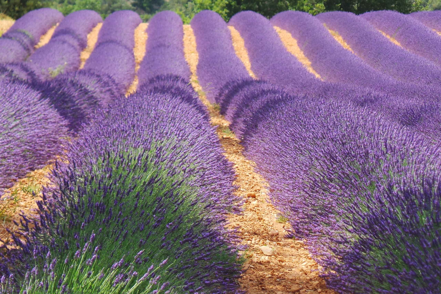 From Nice: Day Trip to Provence