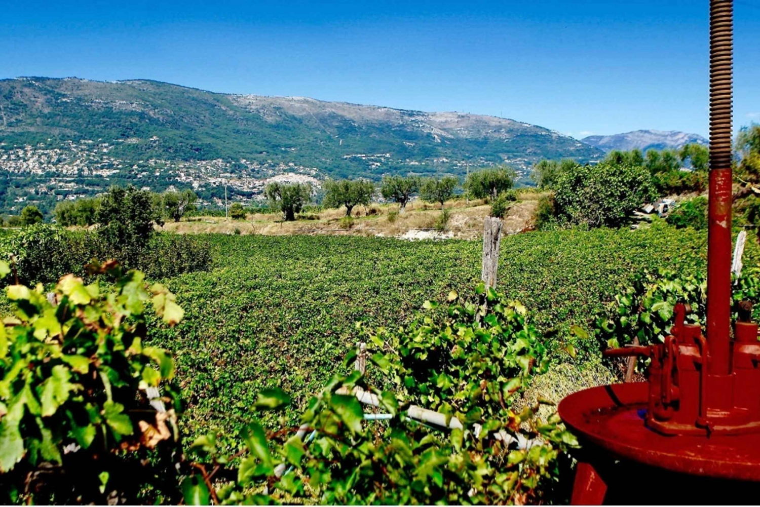 From Nice: Half-Day Wine Tour in the Bellet Wine Region