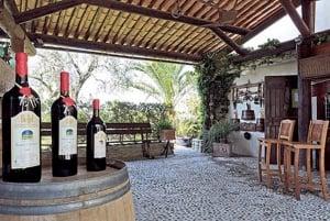 From Nice: Private Bellet Wine Tasting