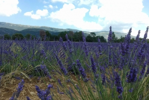 From Nice: The Grand Canyon of Europe & its Lavender Fields