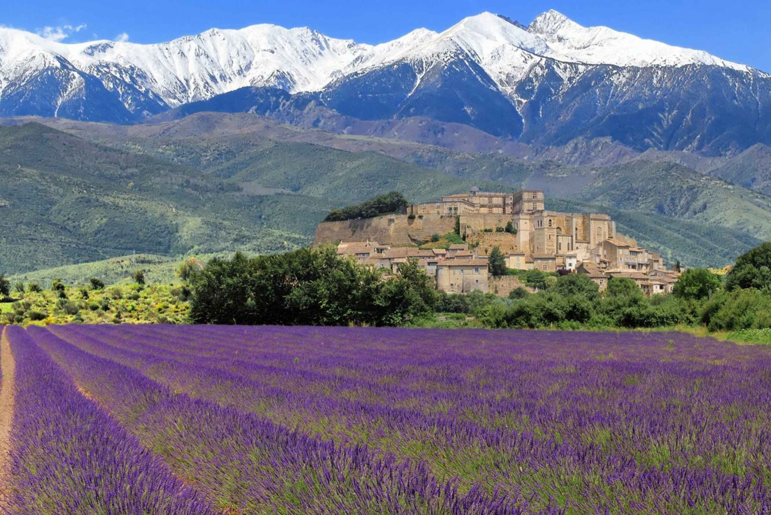 Nice: Fields of Lavender and the Gorges of the Verdon Tour