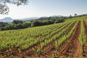 Nice: Provence Wine Full-Day Tour