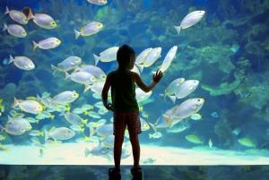 Oceanographic Museum of Monaco Ticket