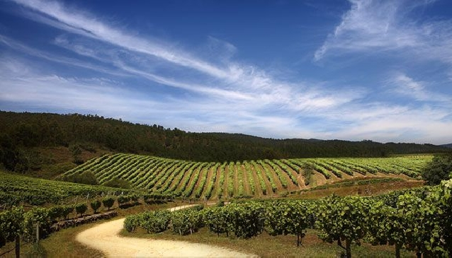 The Rising Fame of Galician Wines