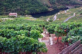 Bodegas Regina Viarum In Galicia My Guide Galicia