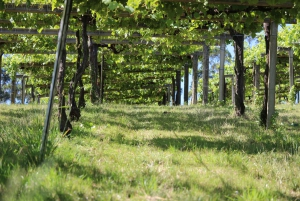 Granbazán Winery: Guided Tour and Wine Tasting