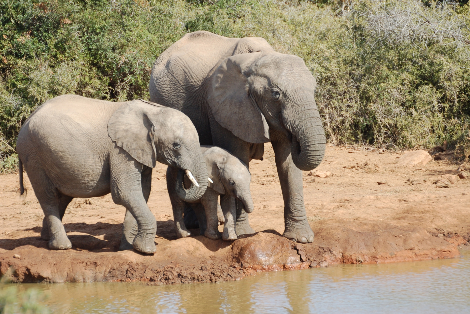 Addo Elephant Park: Full-Day Tour from Port Elizabeth