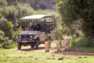 Botlierskop Private Game Reserve: 3-Hour Guided Game Drive