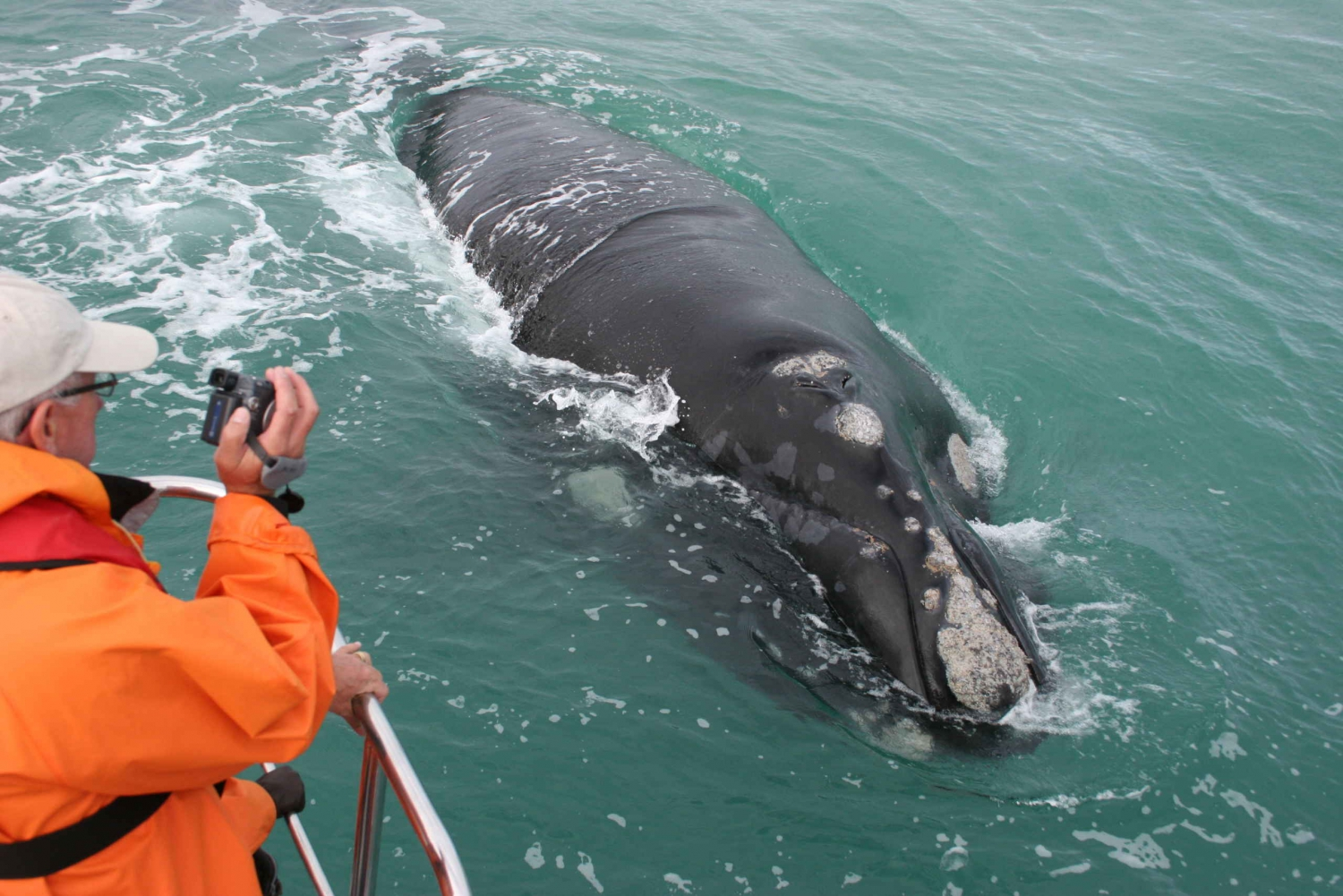 Cape Town: Marine Big 5 Trip in Gansbaai
