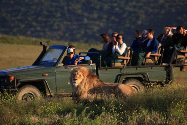 From Cape Town: Private Garden Route Tour & Big Five Safari