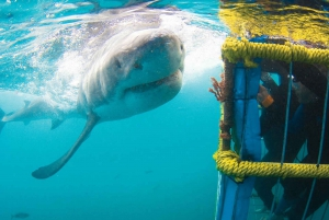 From Cape Town: Private Trip to Gansbaai & Shark Cage Diving